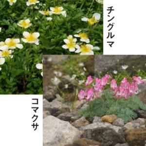 多くの可愛い高山植物が待っています